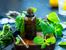 4 етерични масла при алергии