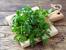 Невероятни ползи за здравето от кориандъра