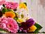 Ядливи цветя, които могат да се гледат в градината