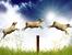 2015-та – Годината на дървената овца