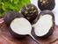 Здравословните ползи от черната ряпа