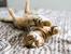 10 неща, които не трябва да държите вкъщи, ако имате котка