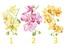 Тест: 3 орхидеи имат съвет за вас