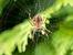 Какво означава, ако сънуваш паяк?