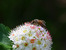 Притча за мухата и пчелата