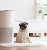 Как да подобрите качеството на въздуха у дома