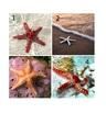 Изберете си морска звезда и вижте какво ви очаква през лятото
