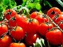 Вкусни храни за млада и здрава кожа
