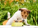 Топ 10 опасни храни за кучета