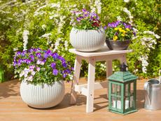 Как да декорирате градината през пролетта