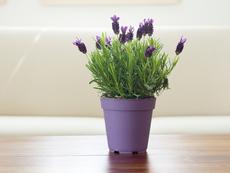 4 растения при лошо настроение и тревожност