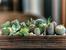 Сукуленти - как да ги декорирате